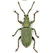 Dritter Nachtrag zur Rüsselkäfer-Fauna d ...